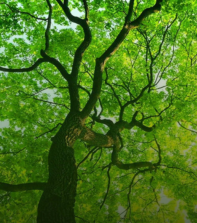 Tree Care & Service - Pruning, Fertilization, Certified Aborist Services, Tree Removal