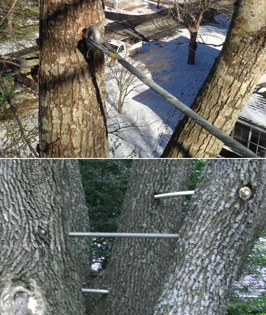 Tree Cabling and Bracing - Long Hill Tree & Lawn Care Service - Connecticut Premium Tree Service