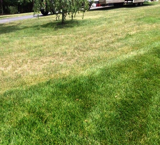 Lawn Care Services Long Hill Tree Amp Lawn Care