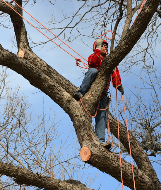 Professional Custom Tree Pruning - Expert Tree Services - Long Hill Tree & Lawn Care Service - CT Premium Tree Service