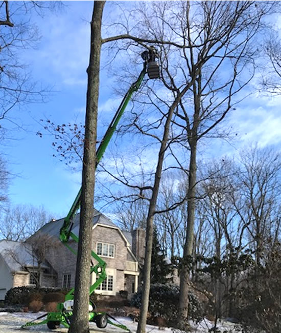 Tree Removal - Expert Tree Services - Long Hill Tree & Lawn Care Service - Connecticut Expert Tree Service