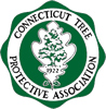 Connecticut Tree