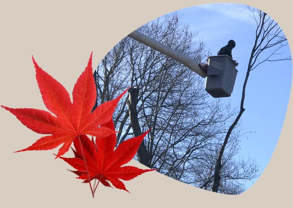 Customer Jobs Photo Gallery Tree Removal - Boom Crane